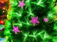 Albero di Natale in Fibra Ottica
