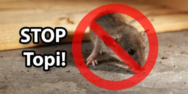 Migliori trappole per topi