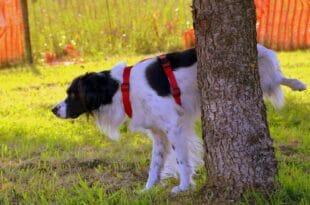 Miglior Repellente Cani