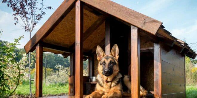 Migliori cucce cane esterno